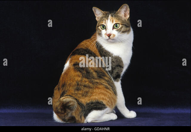 adult Pictures domestic cats of