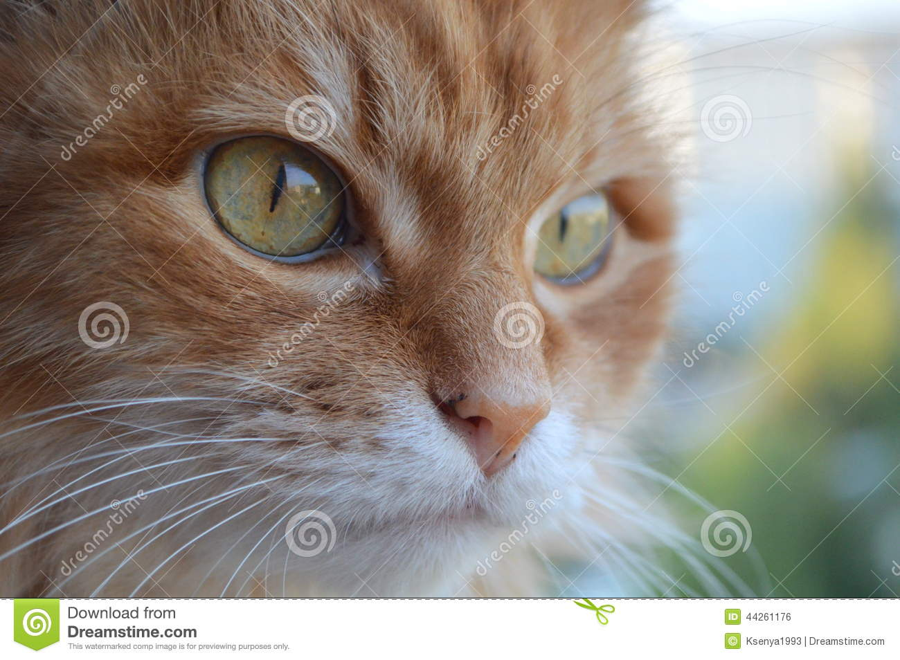 adult domestic cats Pictures of