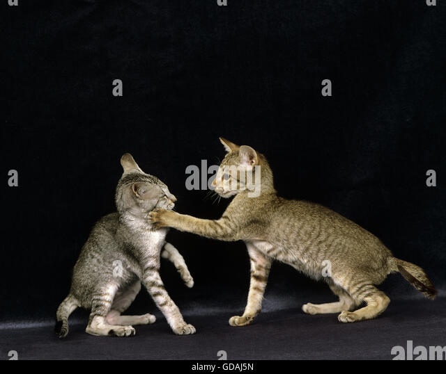 of cats domestic Pictures adult